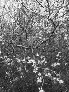 2013-04-16 17.14.51_DxOFP