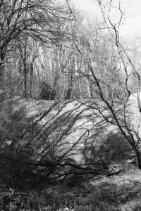 Ombres d'arbres sur le talus